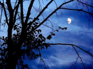 September Moon REDUCED SIZE_72