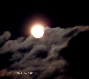 Jan Wild Moon