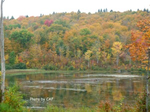 White Birch Lake